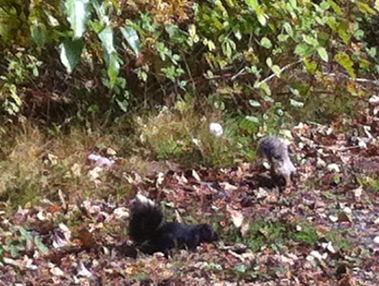 squirrel essay