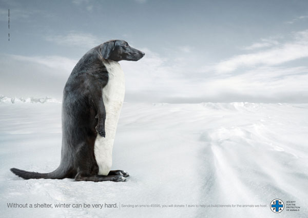 Penguin+Dog Creating Creative Wild Life Awareness: Animals In Advertisements