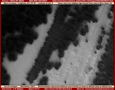 Vegetación en el polo su de Marte