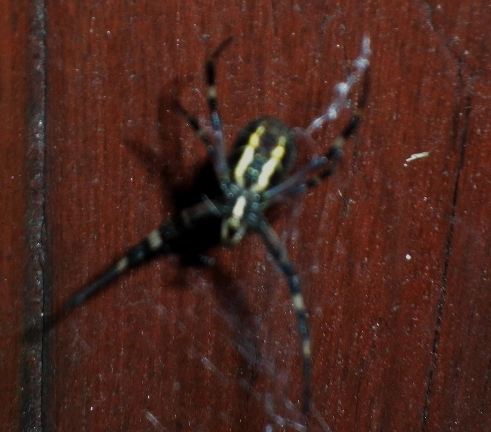 pavúčik na vlásku