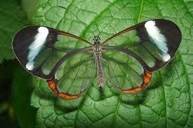 Observar las Mariposas en el Campo
