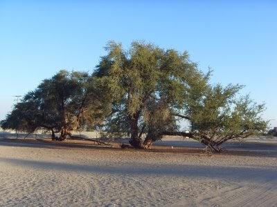 Mitos leyendas de chile zona norte grande for Poda de arboles zona sur