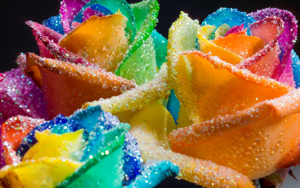 distings: Rainbow Roses