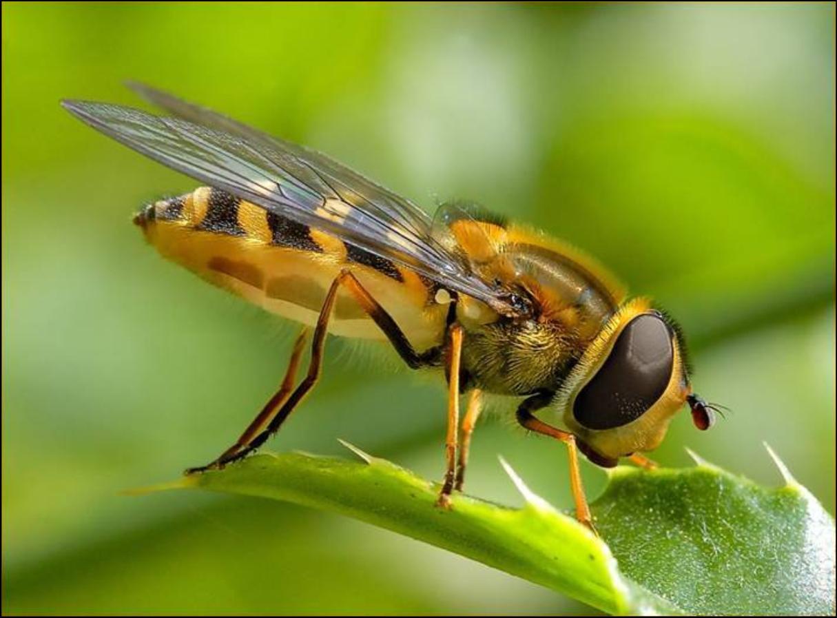http://1.bp.blogspot.com/-1STCTYcQh68/TmpHoZDrsFI/AAAAAAAAAOg/2osE_G7m-Xk/s1600/bee-wallpaper-24-701420.jpg