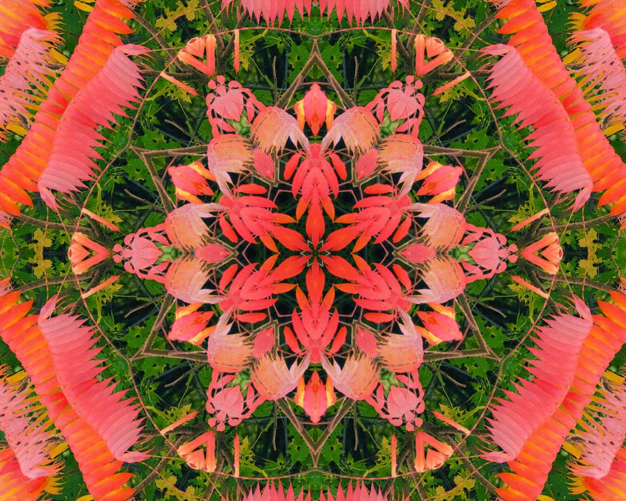 Kaleidoscope Photo Art fall sumac by Jeanne Selep