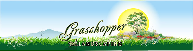 Grasshopper Landscaping and Maintenance