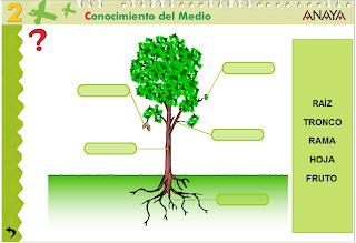http://www.juntadeandalucia.es/averroes/centros-tic/41009470/helvia/aula/archivos/repositorio/0/74/html/datos/03_cmedio/03_Recursos/actividades/04/act1.htm