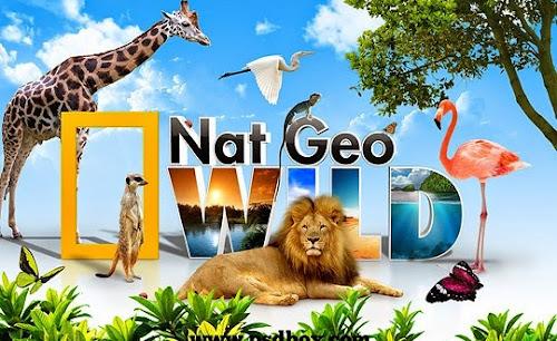 Banner editável - Nat Geo Wild PSD Grátis