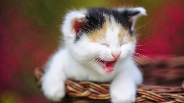 Begini Cara Nabi Memelihara Kucingnya