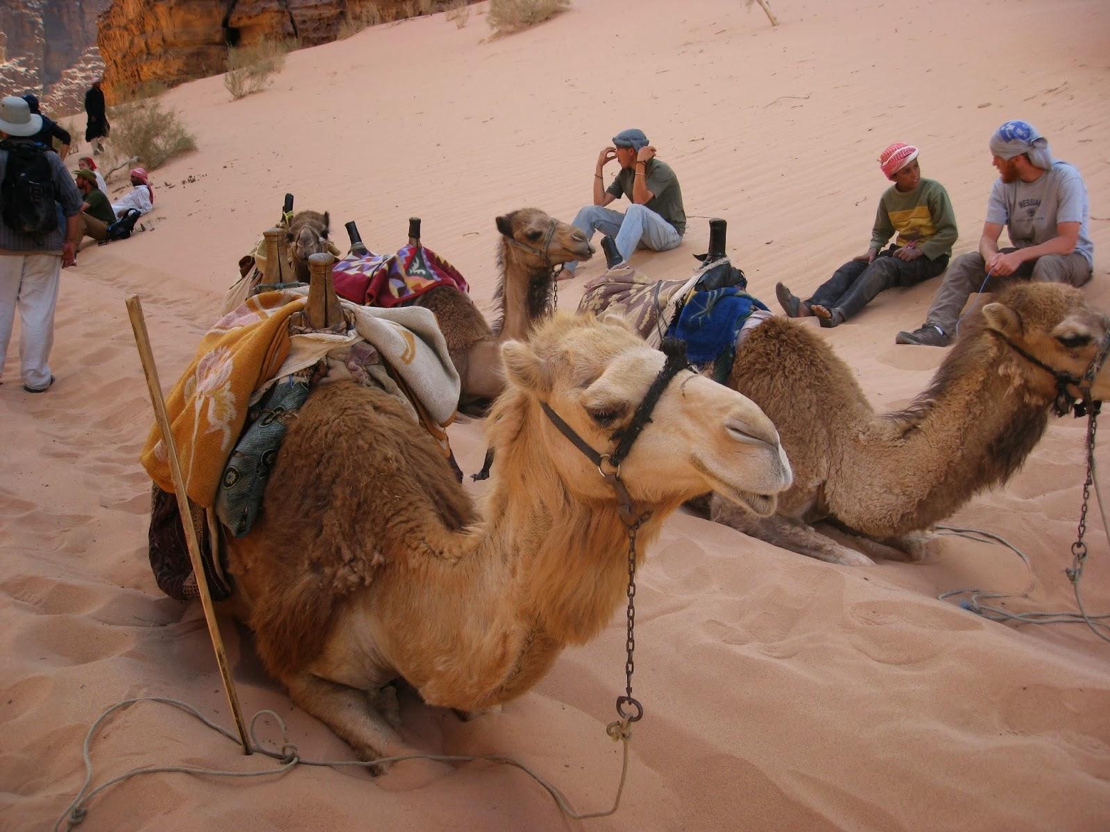 「以色列軍方駱駝」的圖片搜尋結果