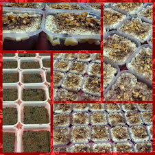 brownies tiramisu