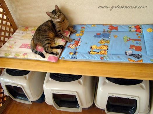 Cómo aprovechar el espacio de los areneros para gatos