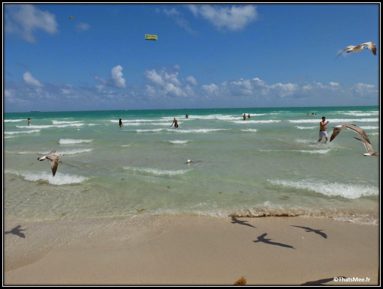 La Plage de South Beach Miami Floride mouette Ocean Drive