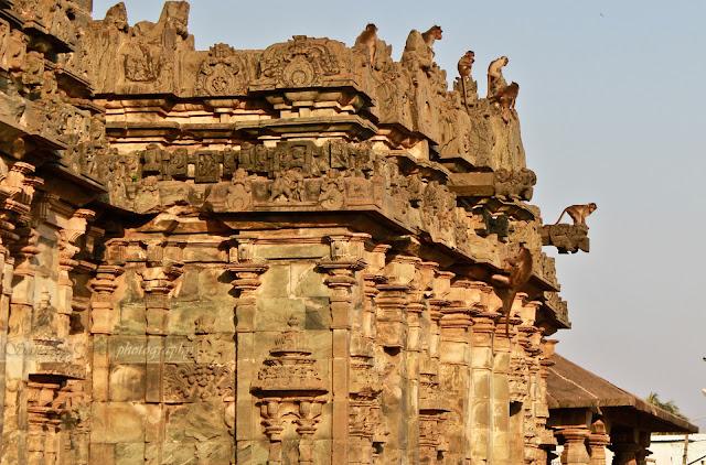 Monkeys at Lakkundi Brahma Jinalaya Temple