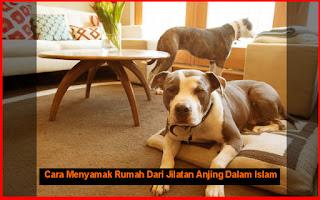 Cara Menyamak Rumah Dari Jilatan Anjing