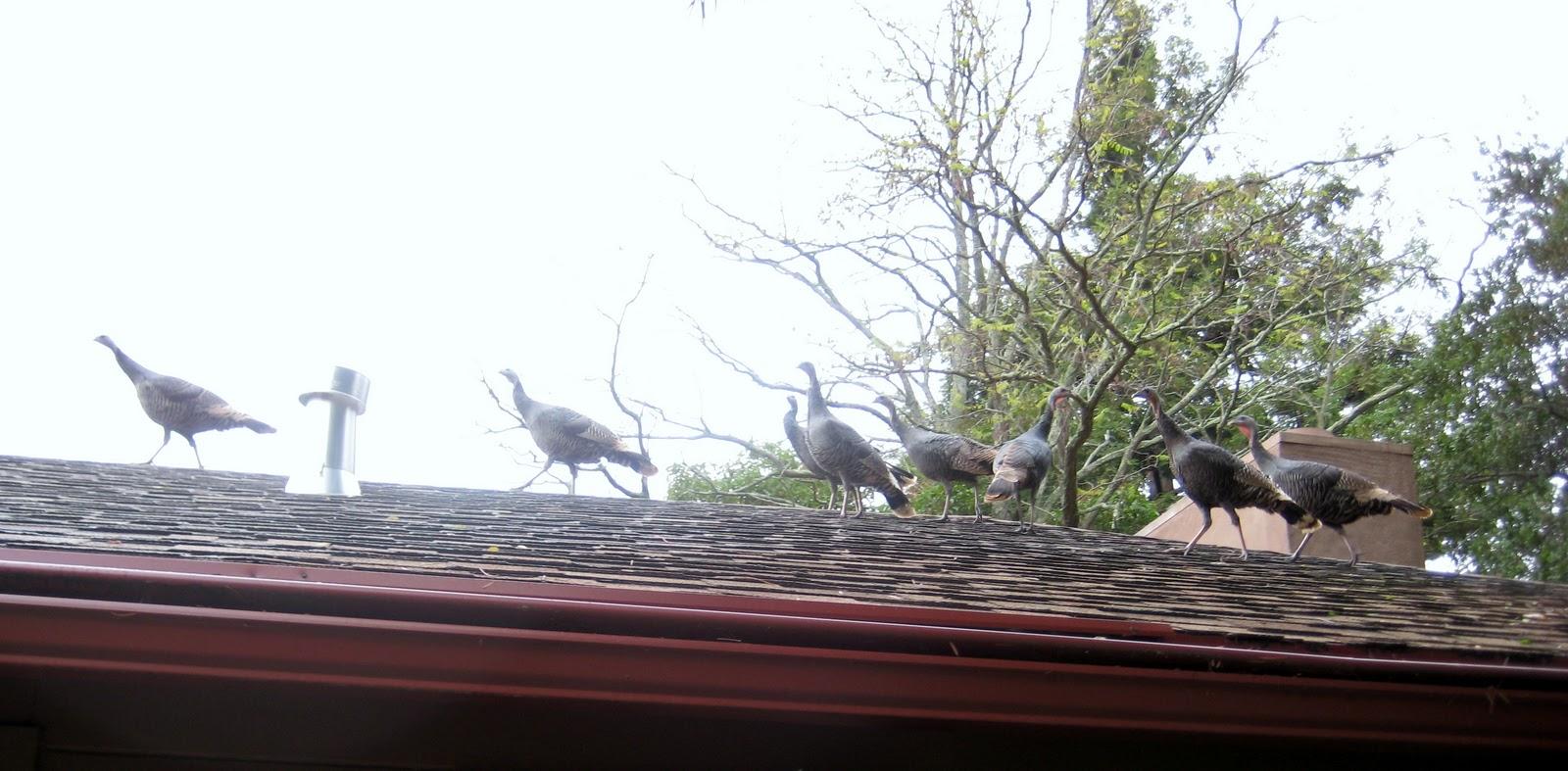 Early birds deals