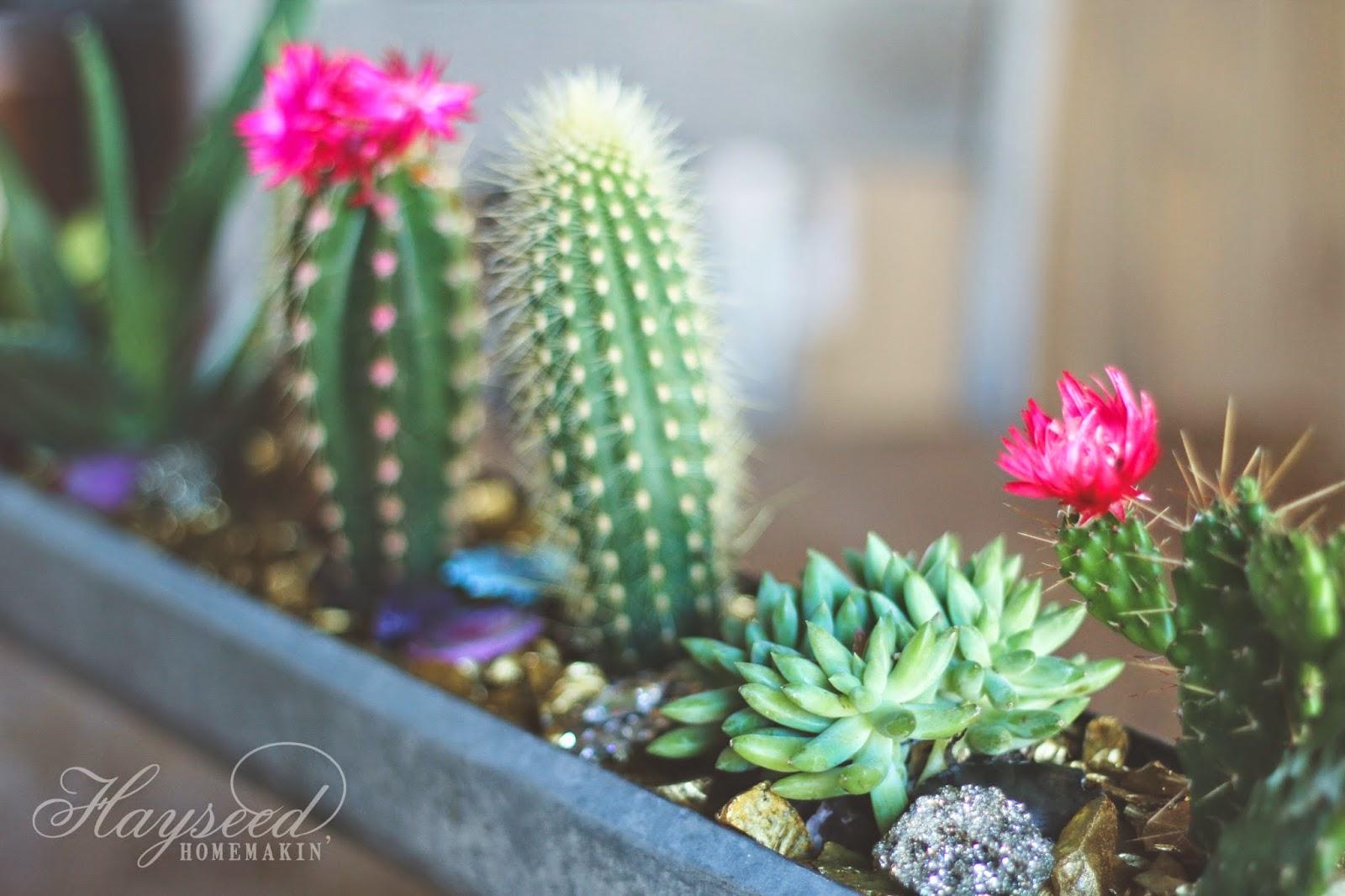 Mini Cactus U0026 Stone Garden