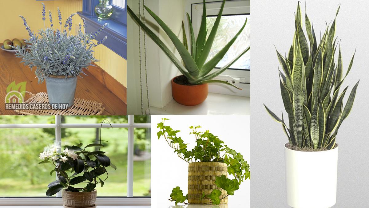Plantas para el dormitorio finest kentia para el saln for Feng shui plantas en el dormitorio