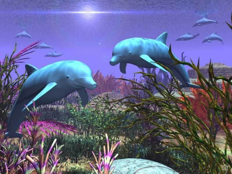 Collected wallpaper 3d animal wallpaper 3d fish for 3d fish wallpaper