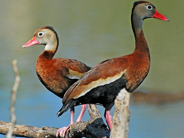 Aves de El Salvador
