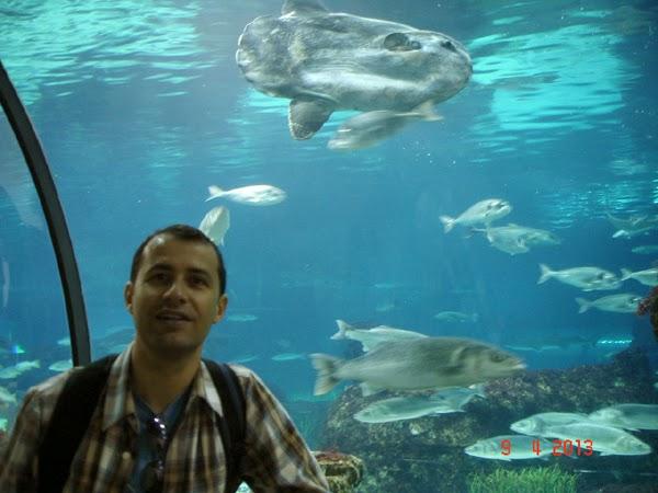 acvariul din Barcelona