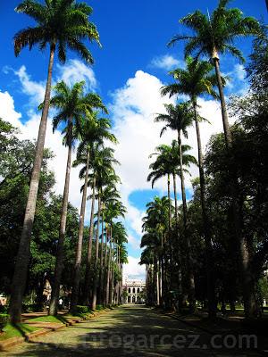 Corredor de palmeiras imperiais da Praça da Liberdade, em Belo Horizonte