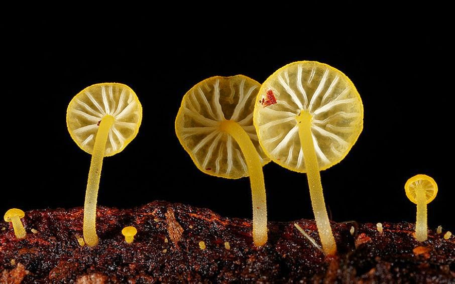 The Magical World of Mushrooms in Mind-Bending Photography of Steve Axford