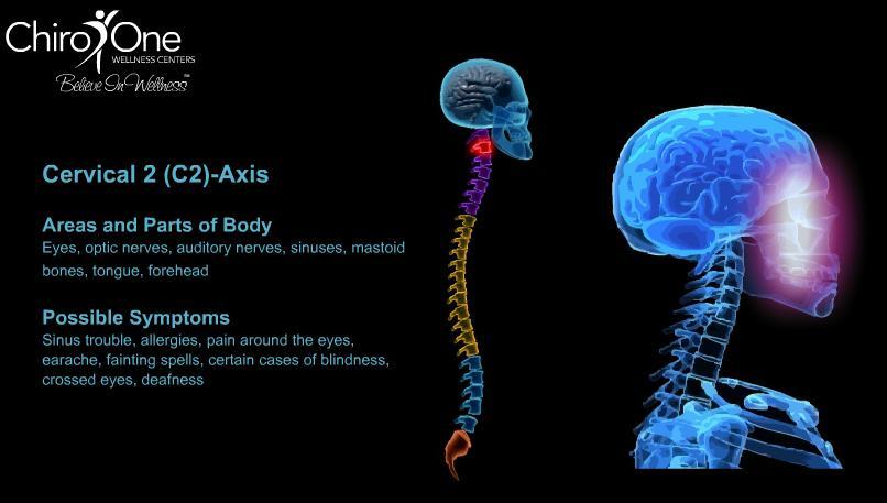 Aromatherapy Cosmos Spinal Column The Pillar Of Health