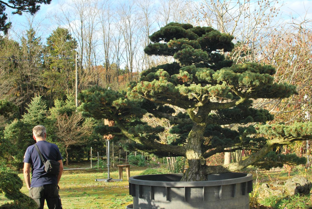 Bonsai Moravia Blog JAPAN 2015 07 GARDEN BONSAI AT IBARAKI