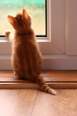 kitten looking out