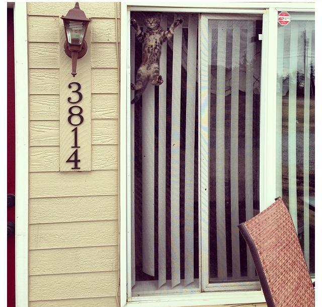 Сумасшедшие коты, фото 26