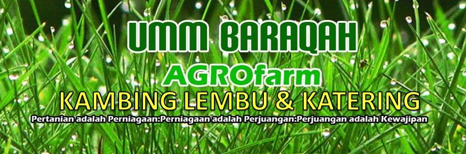 UMM BARAQAH RESOURCES