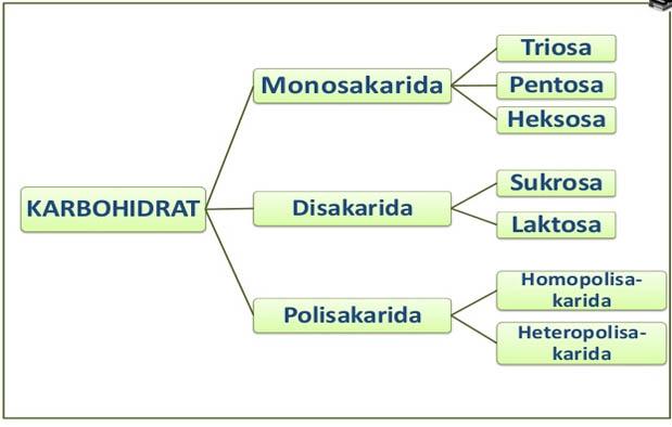 Komponen Penting Kimia Sel
