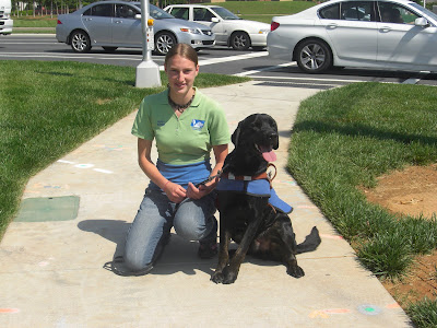 Picture of Rudy in coat/harness in a sit-stay beside me, you can see traffic behind us