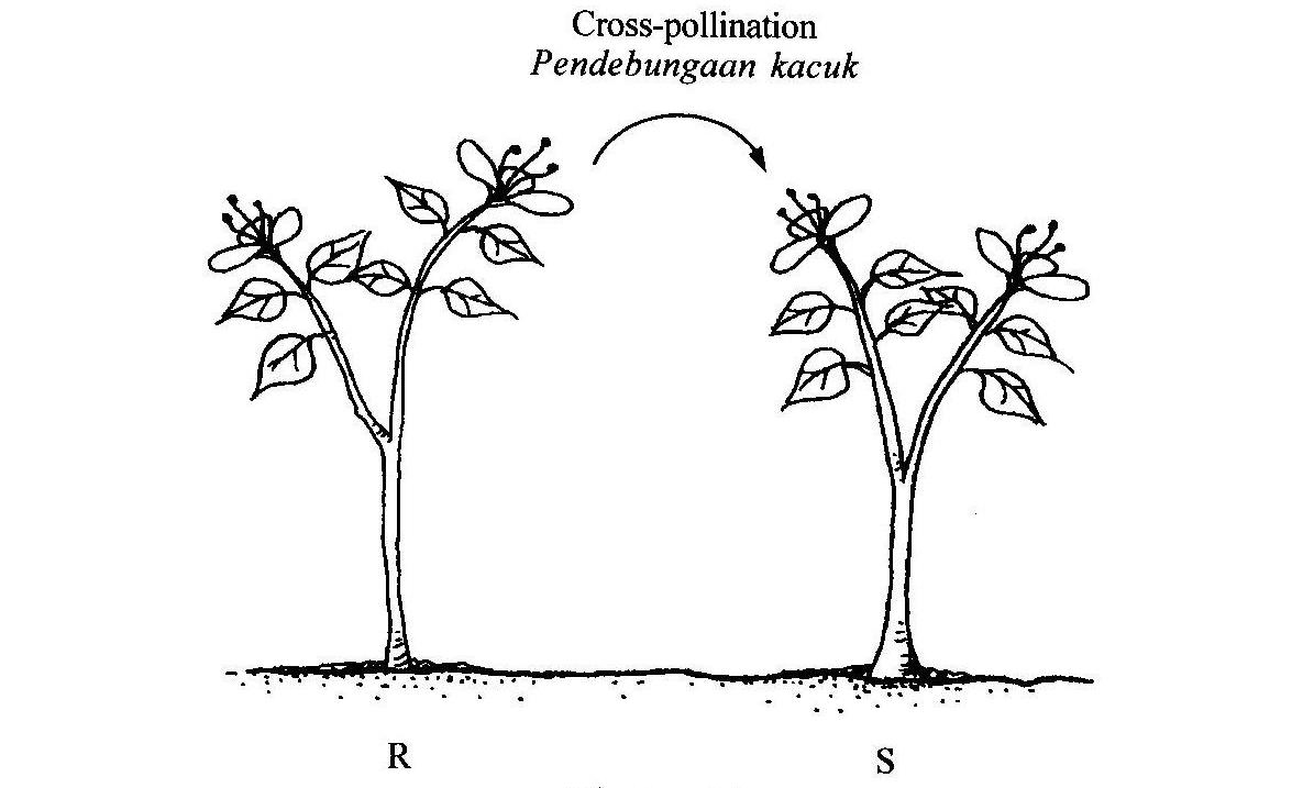 Cross-pollination-diagram Images - Frompo