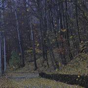 nella contemplazione della pioggia di foglie il fatto fondamentale