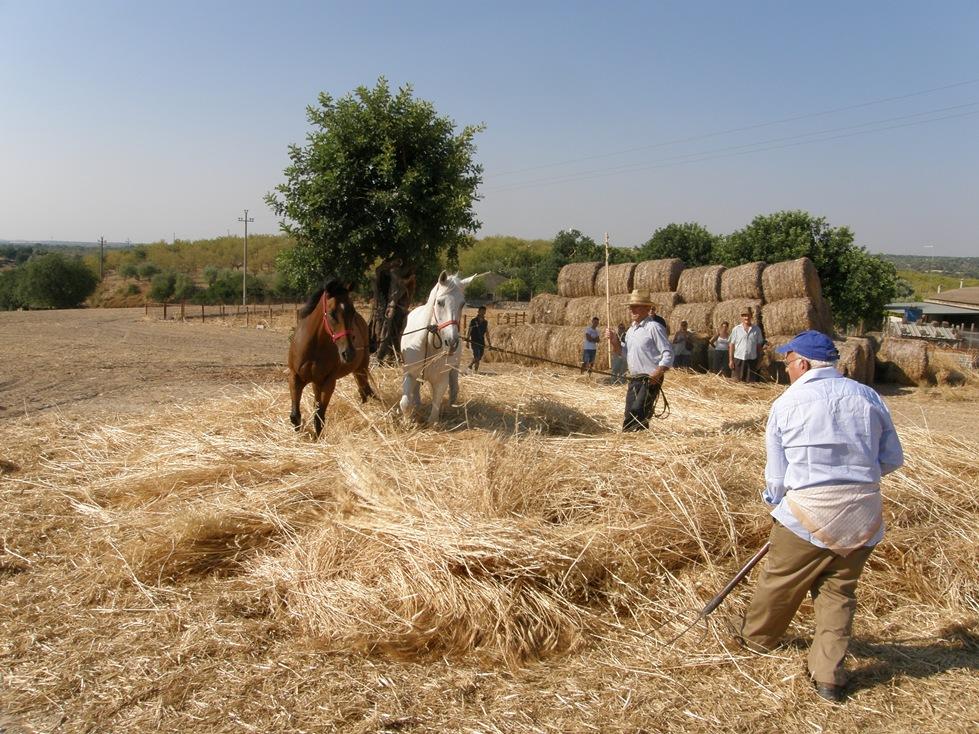 Area iblea la festa del grano for Da dove proviene il grano della barilla