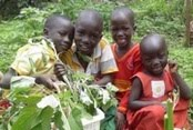 1000 ORTI IN AFRICA