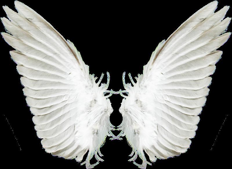asas de anjo ficam -#main