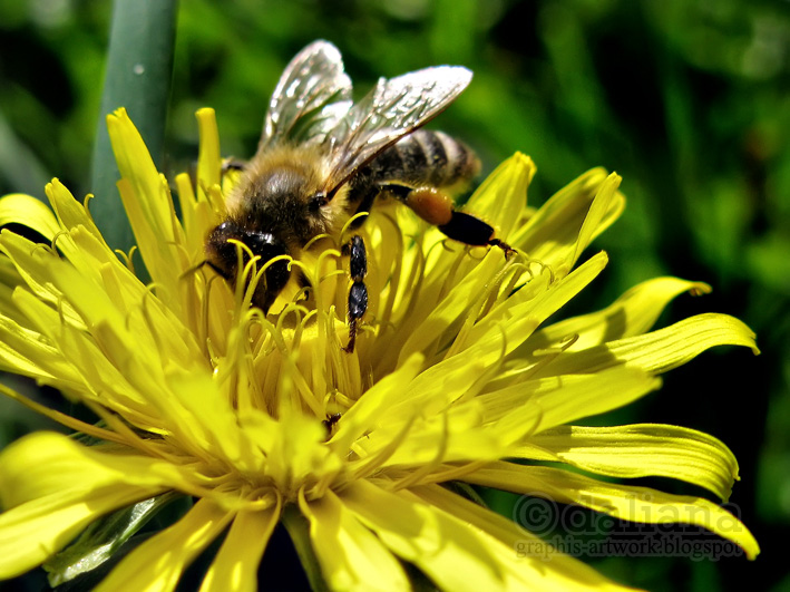 http://1.bp.blogspot.com/-1YVMHDHTB1s/Ta5rUTkiJ_I/AAAAAAAAFCc/_qjwFtiDiL4/s1600/bee.jpg