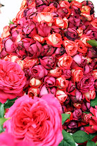Rosenfestival i Bogense