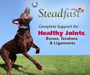 Steadfast Canine 堅定 犬