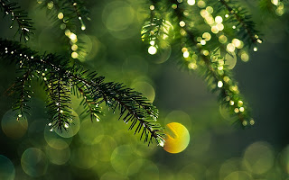Fir Tree Dew Sun Lights Nature HD Wallpaper