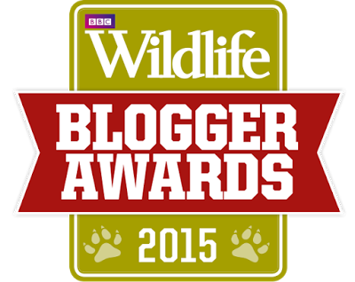 Highly Commended in the BBC Wildlife Blogger Awards