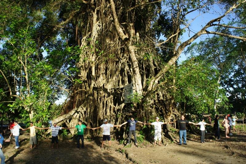 Balete Tree Drawing Baler Balete Tree in Philipp