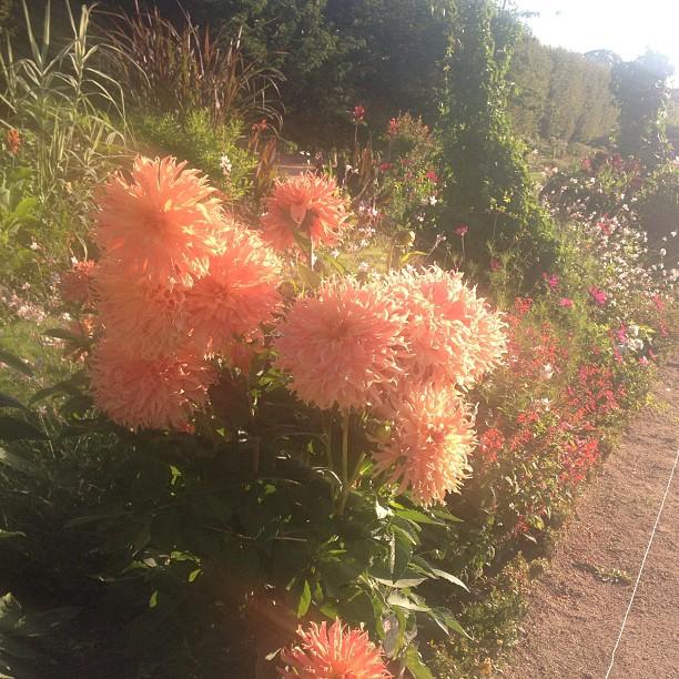 jardin des plantes flower close up