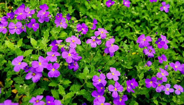 Il mondo in un giardino tre cuscini di fiori - Fiori da esterno primaverili ...