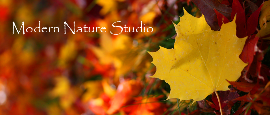 Modern Nature Studio: My Creative World