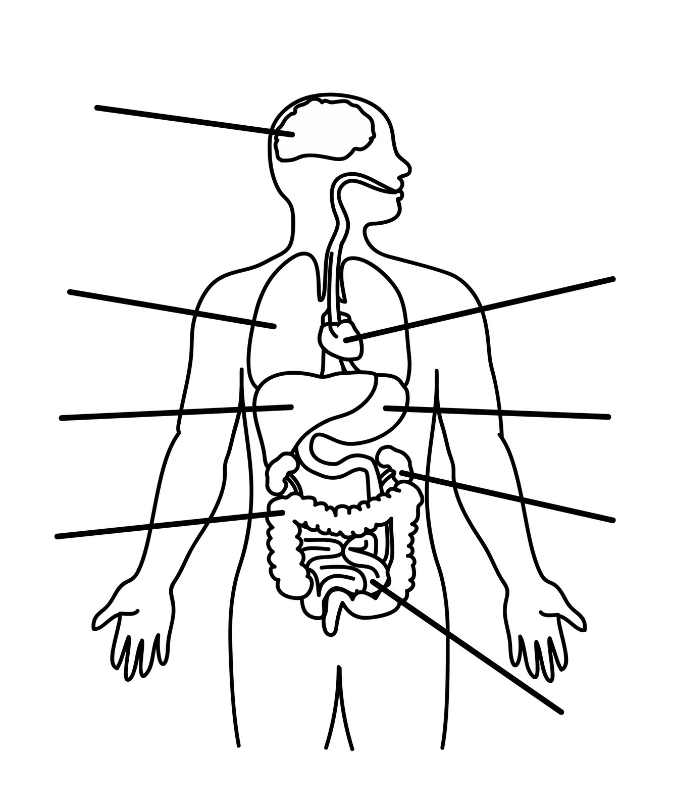 human organ systems coloring pages - photo#10