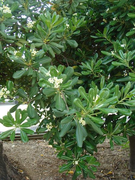 Nombre cientifico de la planta ornamental cuidar de tus for Planta ornamental helecho nombre cientifico